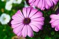 Картинка природа, Цветы, растения