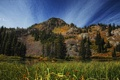 Картинка лес, трава, озеро, the grass around lake martha, гора