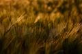 Картинка трава, макро, свет