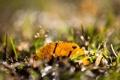 Картинка трава, макро, лист, блики