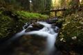 Картинка лес, река, мост, деревья, камни