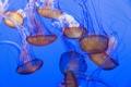 Картинка море, океан, обои, медузы