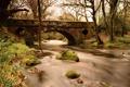 Картинка лес, мост, река, камни, мох
