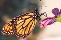 Картинка цветок, макро, природа, бабочка, насекомое