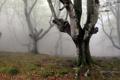 Картинка природа, туман, дерево