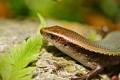Картинка лист, голова, ящерица, коричневая, лапка