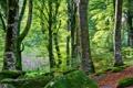 Картинка лес, листья, деревья, камни, мох, кусты