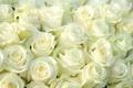 Картинка цветы, букет, белые розы