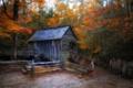 Картинка осень, лес, дом, мельница
