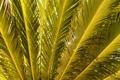 Картинка листья, макро, природа, пальма, green, ветви, gold