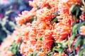 Картинка лето, цветы, оранжевый, природа, солнечно