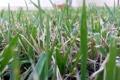 Картинка лето, трава, макро, фон, зеленая