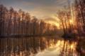 Картинка вода, деревья, природа, река, зеркало