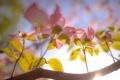 Картинка небо, свет, цветы, ветка, лепестки