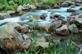 Картинка трава, цветы, река, ручей, камни, поток