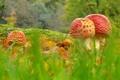 Картинка трава, макро, деревья, грибы