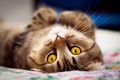 Картинка няша, коте, мур