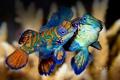 Картинка море, вода, краски, цвет, рыба, экзотика, Indonesia
