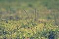Картинка зелень, трава, макро, паутина, колоски