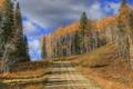 Картинка дорога, осень, лес, небо, деревья