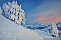Картинка заснеженные, деревья, горы, снег, склон, зима