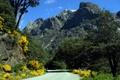 Картинка дорога, деревья, пейзаж, цветы, горы, природа, кусты