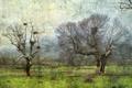 Картинка поле, деревья, пейзаж, стиль