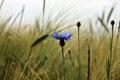 Картинка поле, трава, макро, цветы, природа