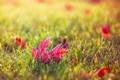 Картинка осень, трава, листья, макро, природа, лист, бордовый
