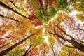 Картинка осень, небо, листья, деревья, краски