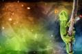 Картинка лягушка, ветка, игуана