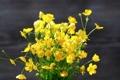 Картинка фото, Цветы, Желтый, Лютик