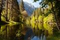 Картинка лес, природа, озеро, парк, фото, Калифорния, США