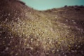 Картинка поле, трава, цветы