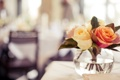 Картинка макро, фон, розы