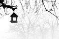 Картинка ветки, туман, дерево, кормушка