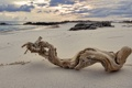 Картинка песок, камни, сухое, облака, коряка, море, дерево