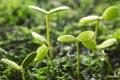 Картинка зелень, капли, ростки, дождь, растения, листочки