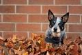 Картинка листья, стена, собака