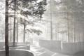 Картинка лес, лучи, деревья, туман, Sohlbergplassen