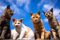 Картинка коты, небо, взгляд, усы