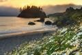 Картинка море, деревья, закат, берег, остров, ромашки