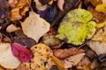 Картинка макро, листва, микс, осенний