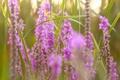Картинка природа, лето, цветы