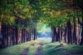 Картинка дорога, лес, деревья, ветки, стволы, листва, травка