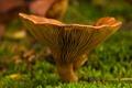 Картинка осень, макро, гриб, мох, фокус, боке