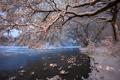 Картинка снег, деревья, река