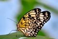 Картинка макро, насекомые, бабочка