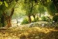 Картинка деревья, природа, кактус, trees, cactus, the nature