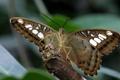 Картинка природа, бабочка, крылья, лапки, ветка, мотылек
